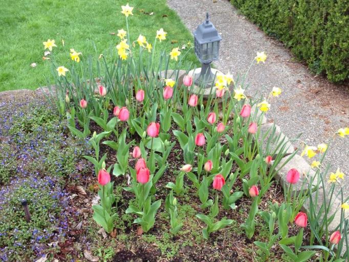 BloomingFlowersinGarden